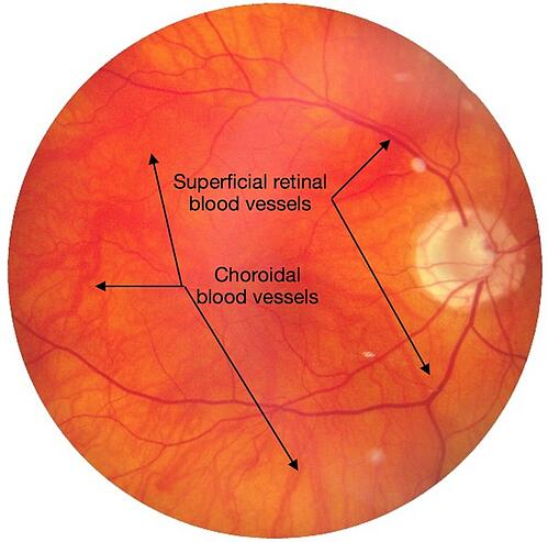 Retinal Blood Supply retinal cells oxygenation retinal vessels