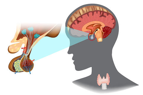 Optic Nerve Hypoplasia Hypothalamic and pituitary dysfunction growth hormone hypothyroidism adrenal insufficiency diabetes insipidus Fedorov Restore Vision Clinic